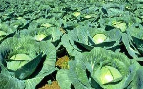 Tháng 8 nên trồng những loại rau, củ, quả gì?