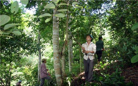 Tạo sinh kế lâu dài cho người dân từ chính sách bảo vệ rừng