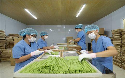 Độc đáo ống hút được làm từ nông sản