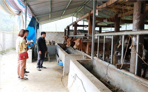 Hà Giang: Hiệu quả mô hình chăn nuôi gắn với bảo vệ môi trường