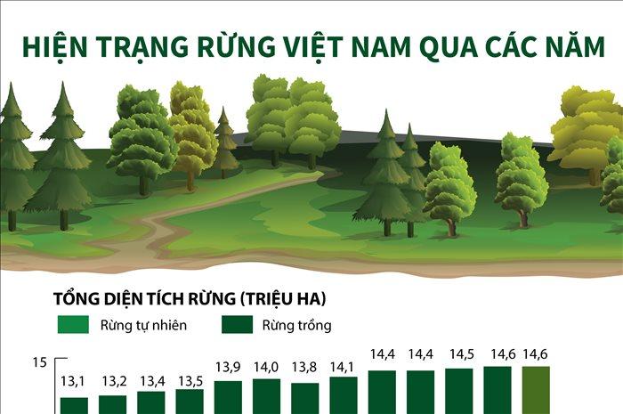 Hiện trạng rừng Việt Nam qua các năm