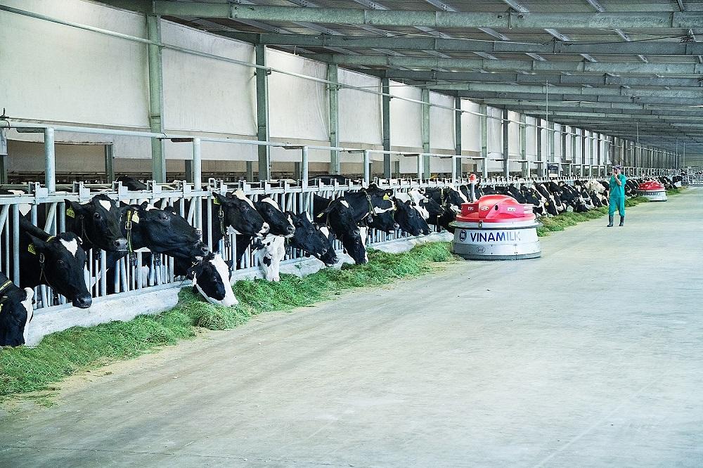 Công nghệ thu gom chất thải được Vinamilk áp dụng giúp vệ sinh chuồng trại luôn sạch, đảm bảo sức khỏe và sự thoải mái cho đàn bò sữa