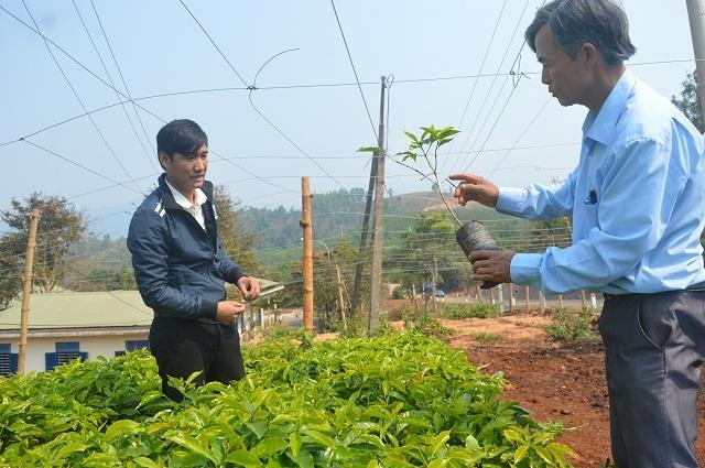 Vườn giống cà phê của HTX Chân Mây Bắc Hướng Hóa (Ảnh: Ngọc Giang)