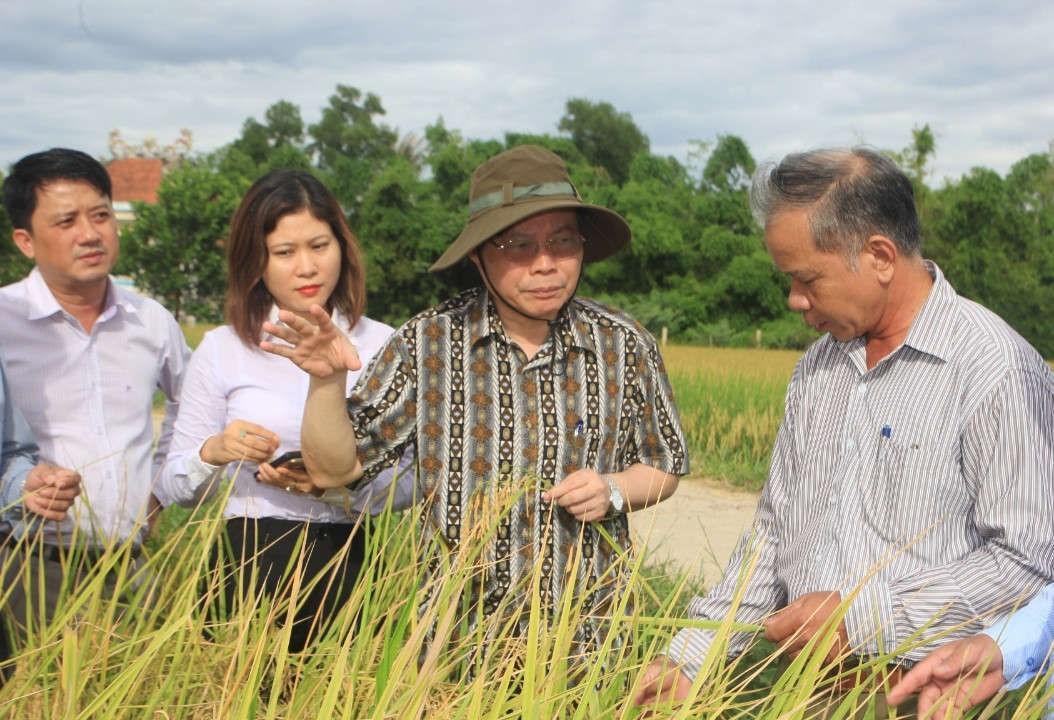 Phó Chủ tịch Quốc hội Phùng Quốc Hiển thăm cánh đồng lúa hữu cơ tại thôn Phước Thị xã Gio Mỹ , Gio Linh (Ảnh: Vĩnh Nhiên)