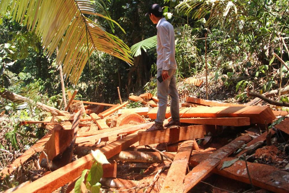 Tháng 4/2019, rừng tự nhiên tại khoảnh 6,7 - Tiểu khu 790 thuộc xã Trà Leng huyện Nam Trà My, tỉnh Quảng Nạm bị đốn hạ (địa phương xảy ra vụ sạt lở đất vùi lấp 53 người ngày 28/10/2020). (Ảnh: IT)