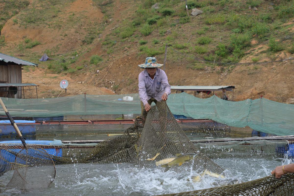 Tham gia các HTX, THT không chỉ giúp người dân yên tâm nuôi trồng thủy sản mà còn đem lại thu nhập ổn định