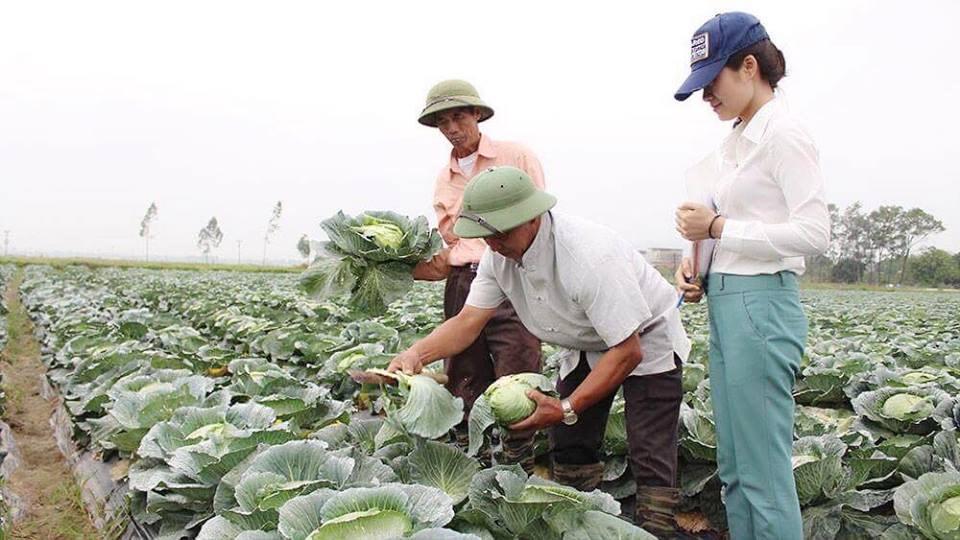 Sản phẩm của HTX rau sạch Yên Dũng được kiểm tra nghiêm ngặt trong quá trình sản xuất