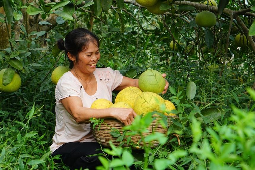 Bưởi Đoan Hùng là một trong 75 thương hiệu vàng nông nghiệp Việt Nam.
