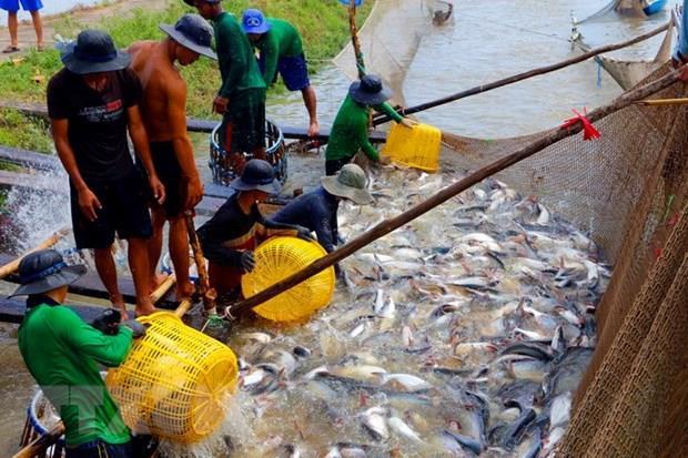 Phát triển thủy sản ở Phú Thọ đã trở thành hướng đi thoát nghèo, làm giàu chính đáng của nhiều hộ dân.