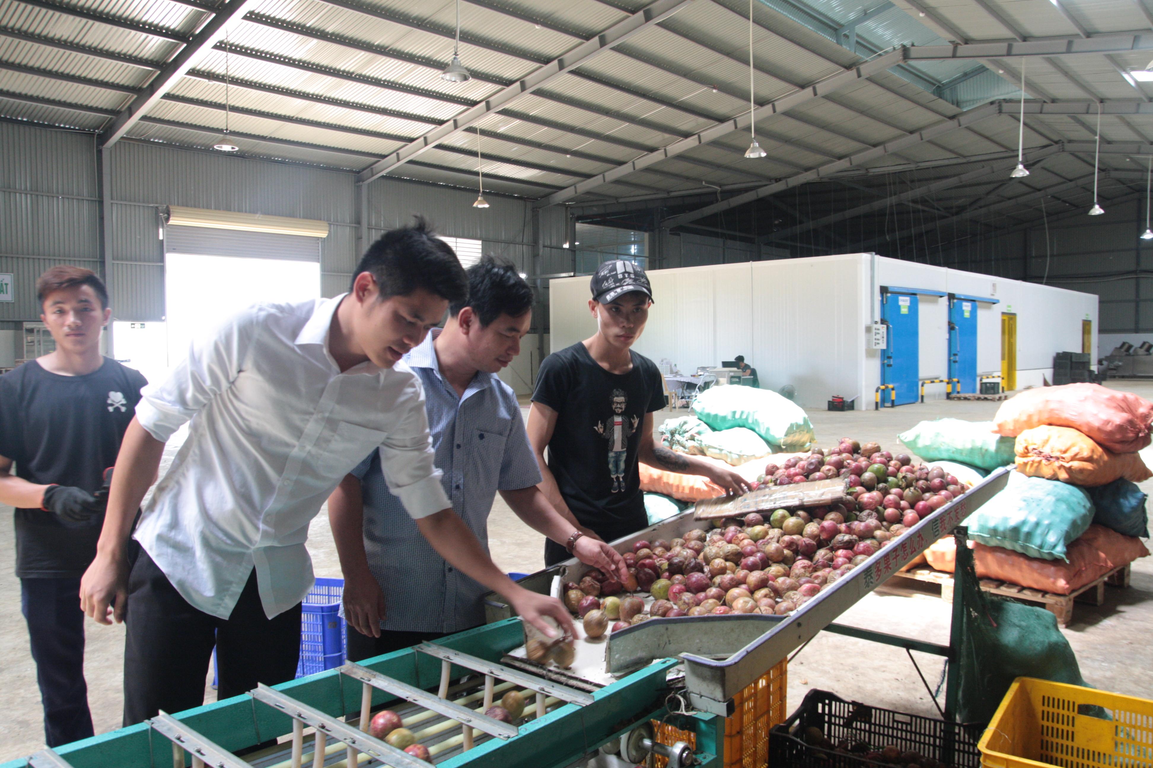 Muốn thúc đẩy doanh nghiệp đầu tư vào lĩnh vực chế biến nông sản, cần phải có những chính sách thu hút phù hợp