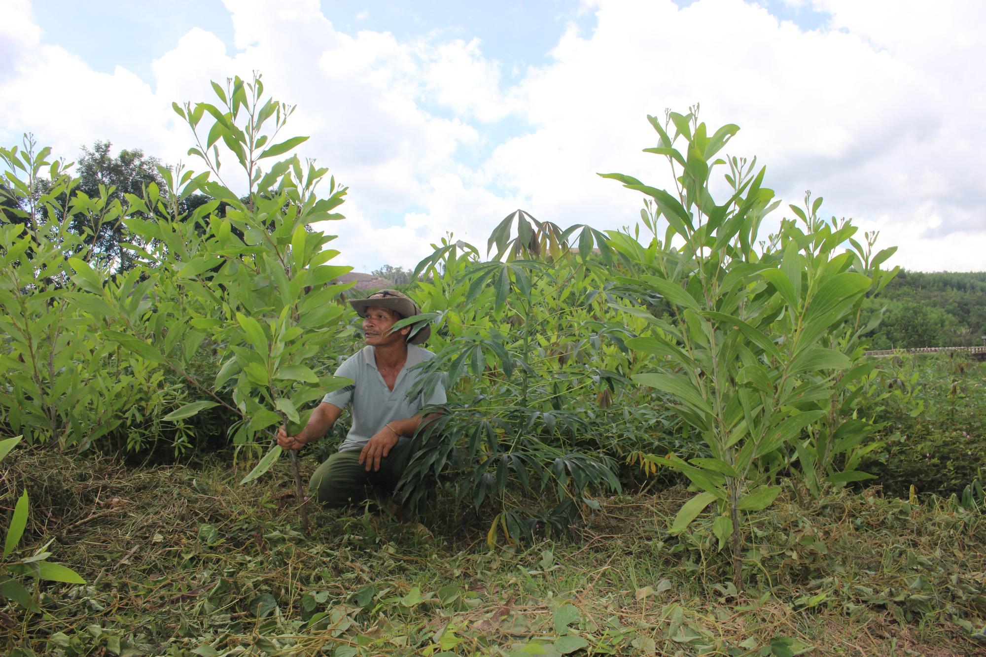 Người dân chăm sóc rừng trồng theo Nghị định 75