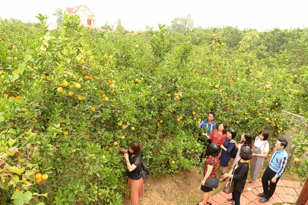 Du khách tham quan, trải nghiệm nhà vườn.
