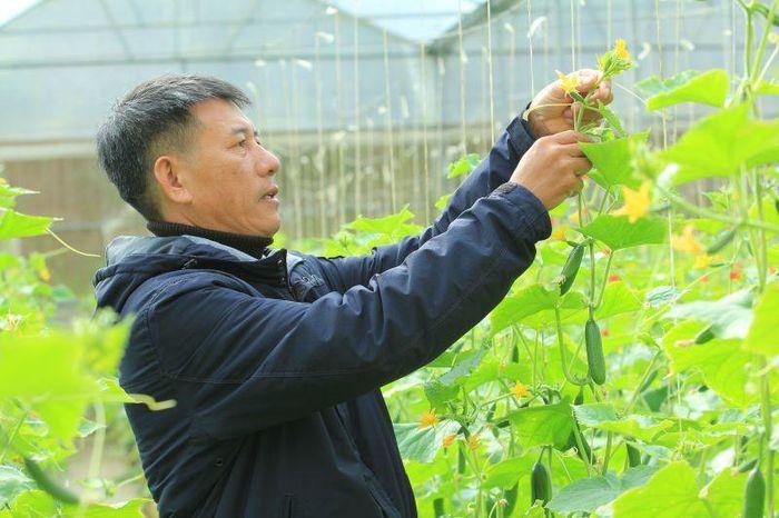 Ông Mai Văn Khẩn trực tiếp kiểm tra, chăm sóc sản phẩm nông nghiệp của HTX