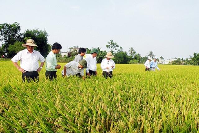 Phát triển HTX nông nghiệp là yêu cầu khách quan, cấp thiết để đảm bảo cho kinh tế nông nghiệp của tỉnh Quảng Nam phát triển bền vững (Ảnh: TL)