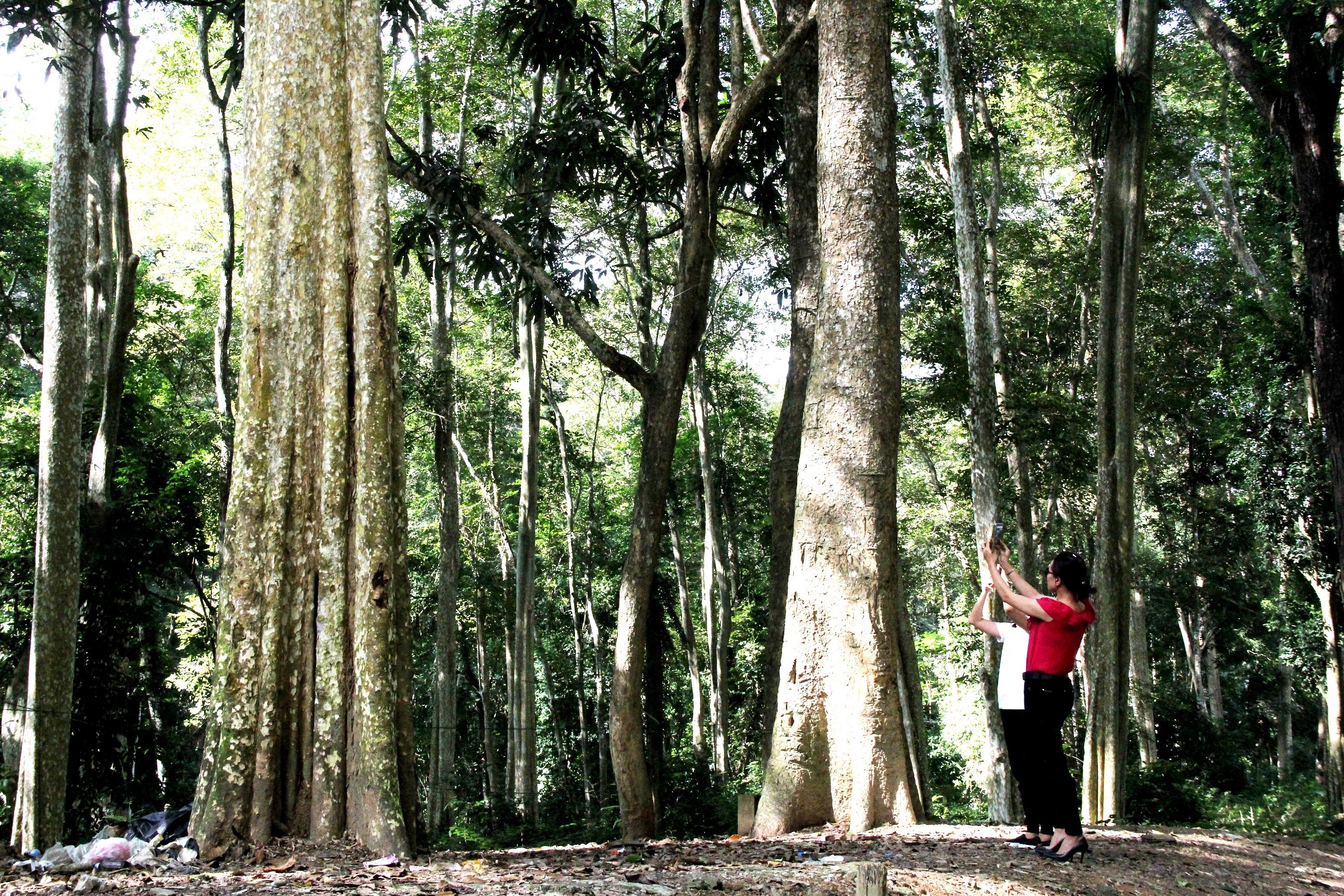 Khu rừng là điểm chek in lí tưởng của du khách