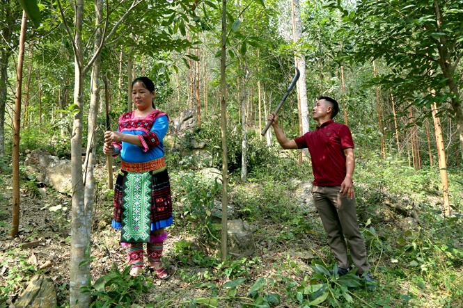 Vợ chồng anh Sùng Seo Dì, xã Kiến Thiết (Yên Sơn) chăm sóc vườn đồi.