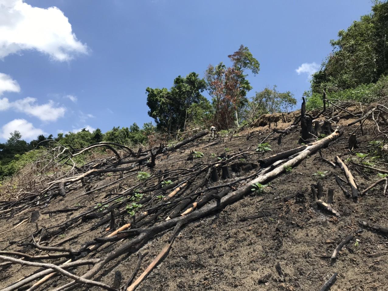 Nhiều diện tích rừng bị tàn phá và đốt cháy tại tiểu khu 235, xã Tây Thuận, huyện Tây Sơn