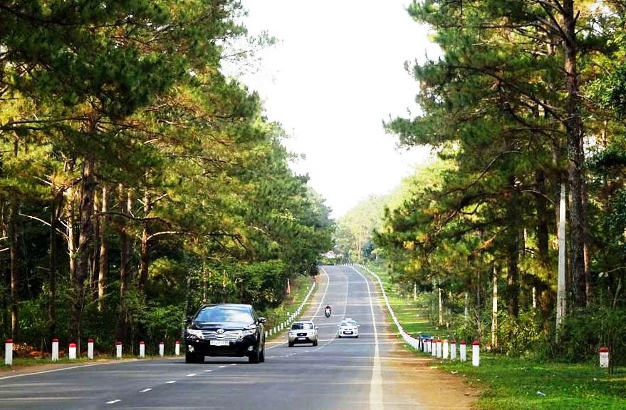 Măng Đen hấp dẫn du khách bởi bạt ngàn thông xanh được trồng cách đây gần 40 năm. Ảnh: HL