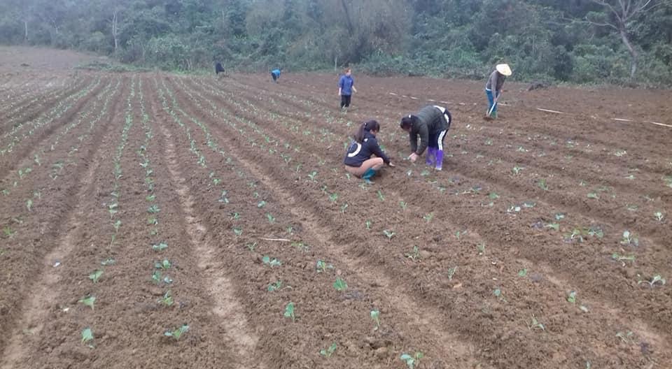 Người dân ở Khâu Tinh gieo trồng vụ rau mới