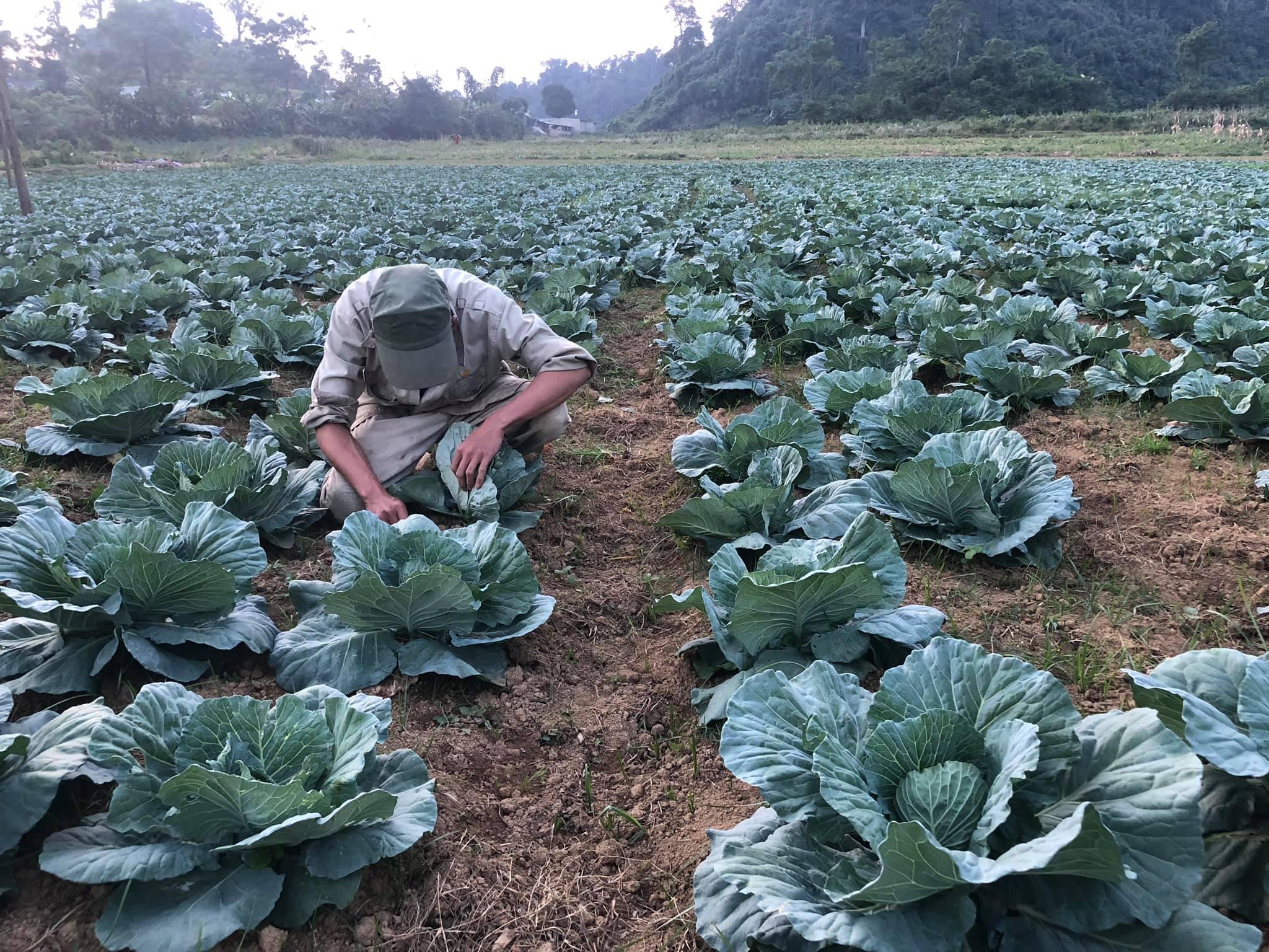 Người dân Khâu Tinh chăm sóc rau theo tiêu chuẩn VietGap