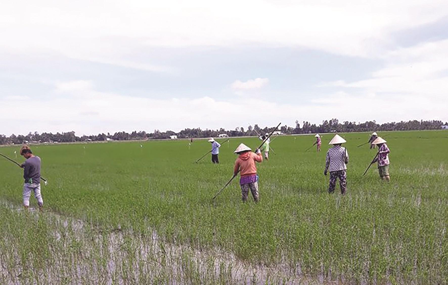 Người nông dân Vĩnh Phúc tích cực tham gia phong trào vì một nền nông nghiệp an toàn, bền vững; môi trường nông thôn xanh- sạch- đẹp