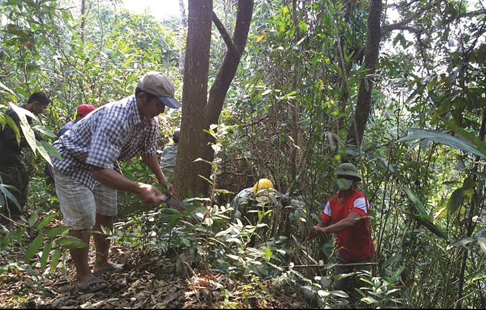 Người dân huyện Nậm Nhùn (Lai Châu) phát dọn ngăn ngừa nguy cơ cháy rừng