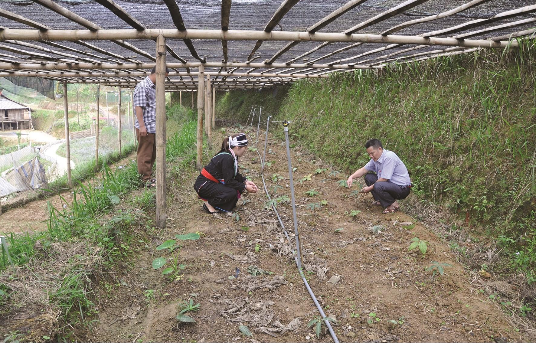 Chương trình MTQG phát triển KT-XH vùng đồng bào DTTS và miền núi giai đoạn 2021 - 2030 được kỳ vọng sẽ giải quyết căn bản những khó khăn của vùng đồng bào DTTS và miền núi. (Trong ảnh: Người dân Hoàng Su Phì đưa công nghệ tưới nước mới vào phục vụ sản xuất nông nghiệp).