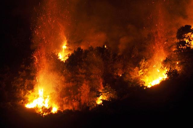 Lửa bốc cháy dữ dội, thiêu cháy nhiều diện tích rừng thông.