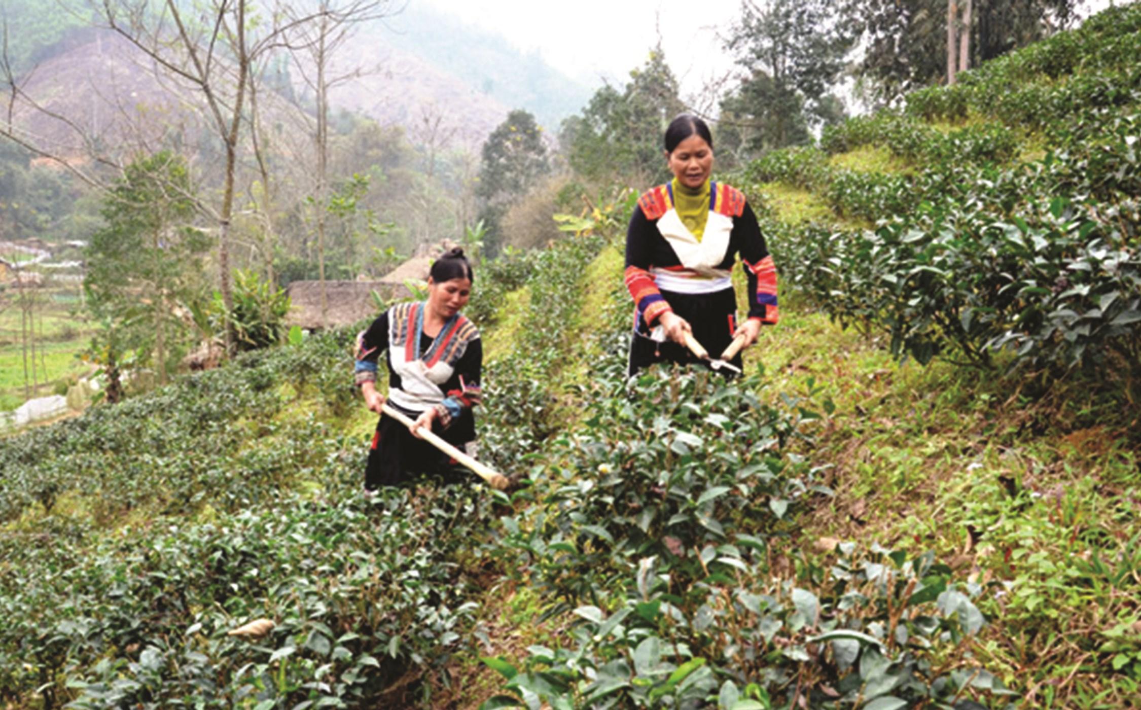 Người dân Pà Thẻn ở thôn Khuổi Hóp, xã Linh Phú (Chiêm Hóa) được hỗ trợ vốn từ Chương trình 135 để phát triển sản xuất. (Ảnh tư liệu)