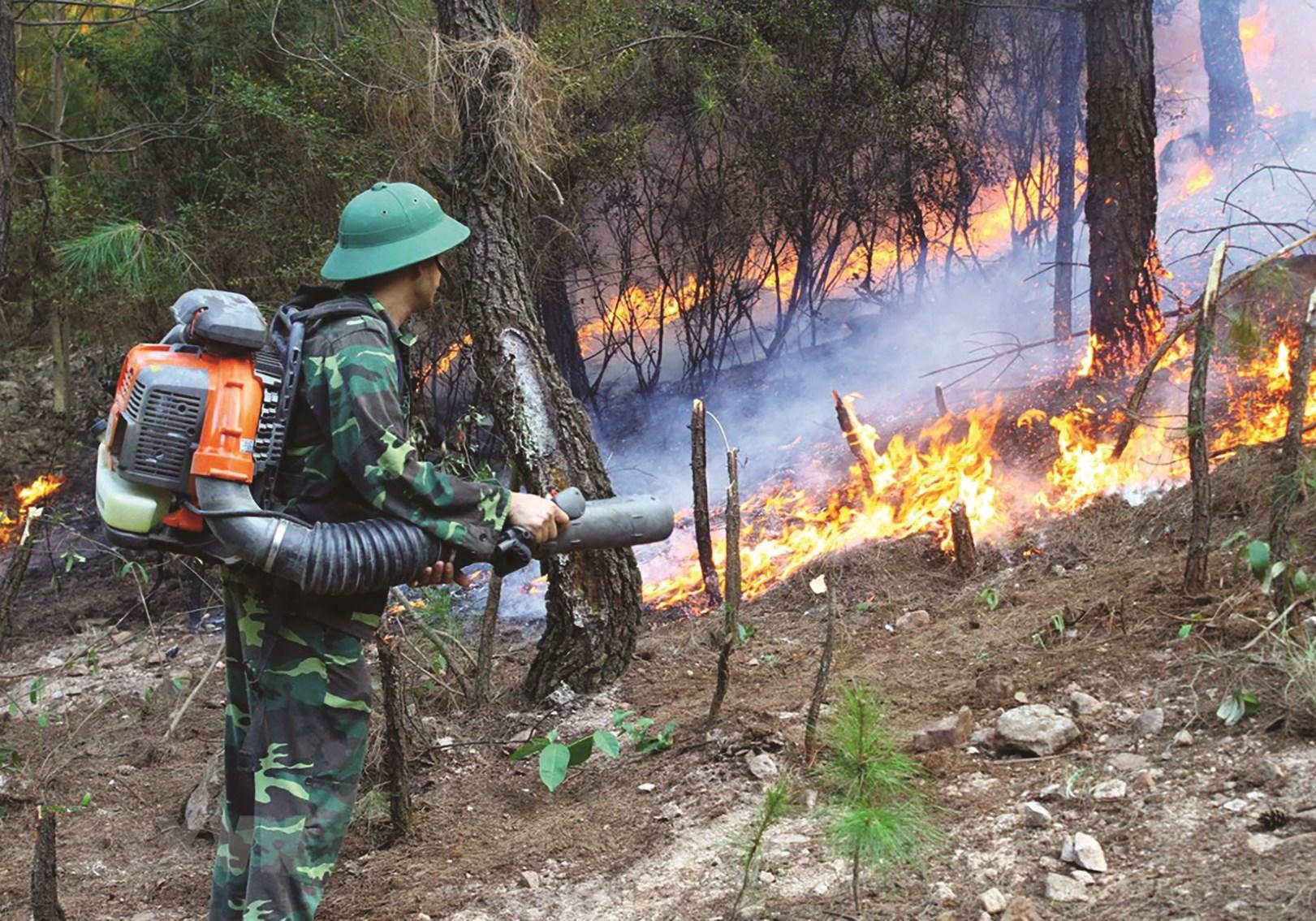 Diện tích rừng bị cháy tăng là thách thức đối với tăng trưởng của ngành Lâm nghiệp. (Trong ảnh: Các lực lượng chức năng nỗ lực dập lửa tại xã Diễn Lợi, huyện Diễn Châu, tỉnh Nghệ An ngày 28/6/2020)