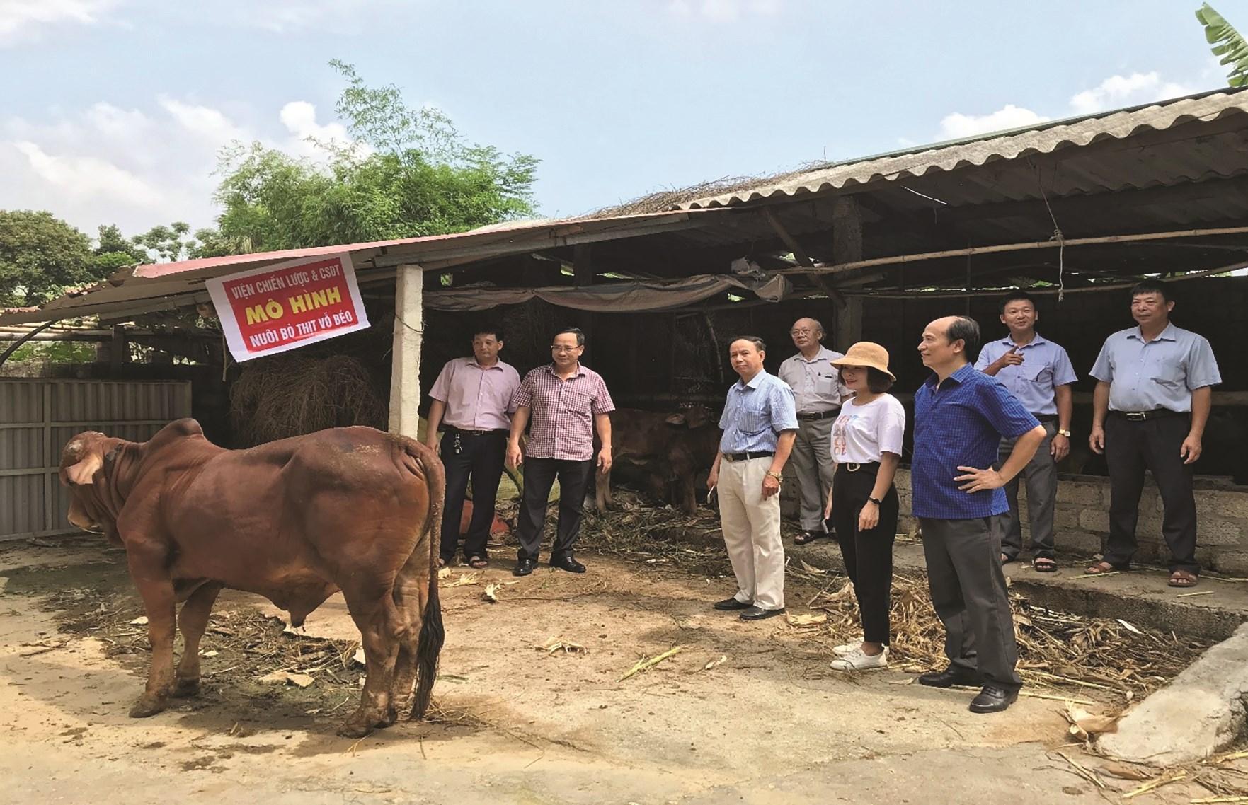 Mô hình nuôi bò thịt vỗ béo giúp nhiều hộ dân từng bước thoát nghèo.