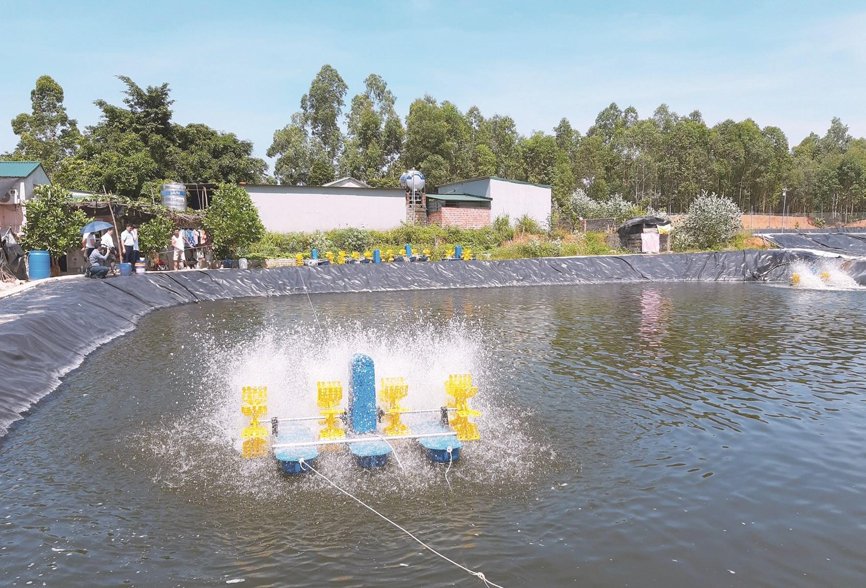 Mô hình nuôi cá rô phi bằng công nghệ Biofloc tại Vĩnh Phúc