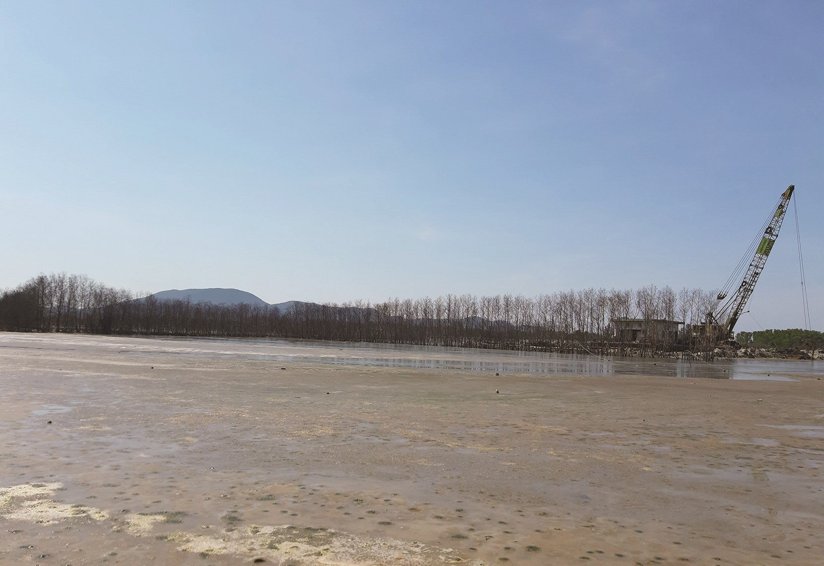 Nhiều diện tích cây xanh trong rừng ngập mặn đang mất dần do triển khai dự án du lịch