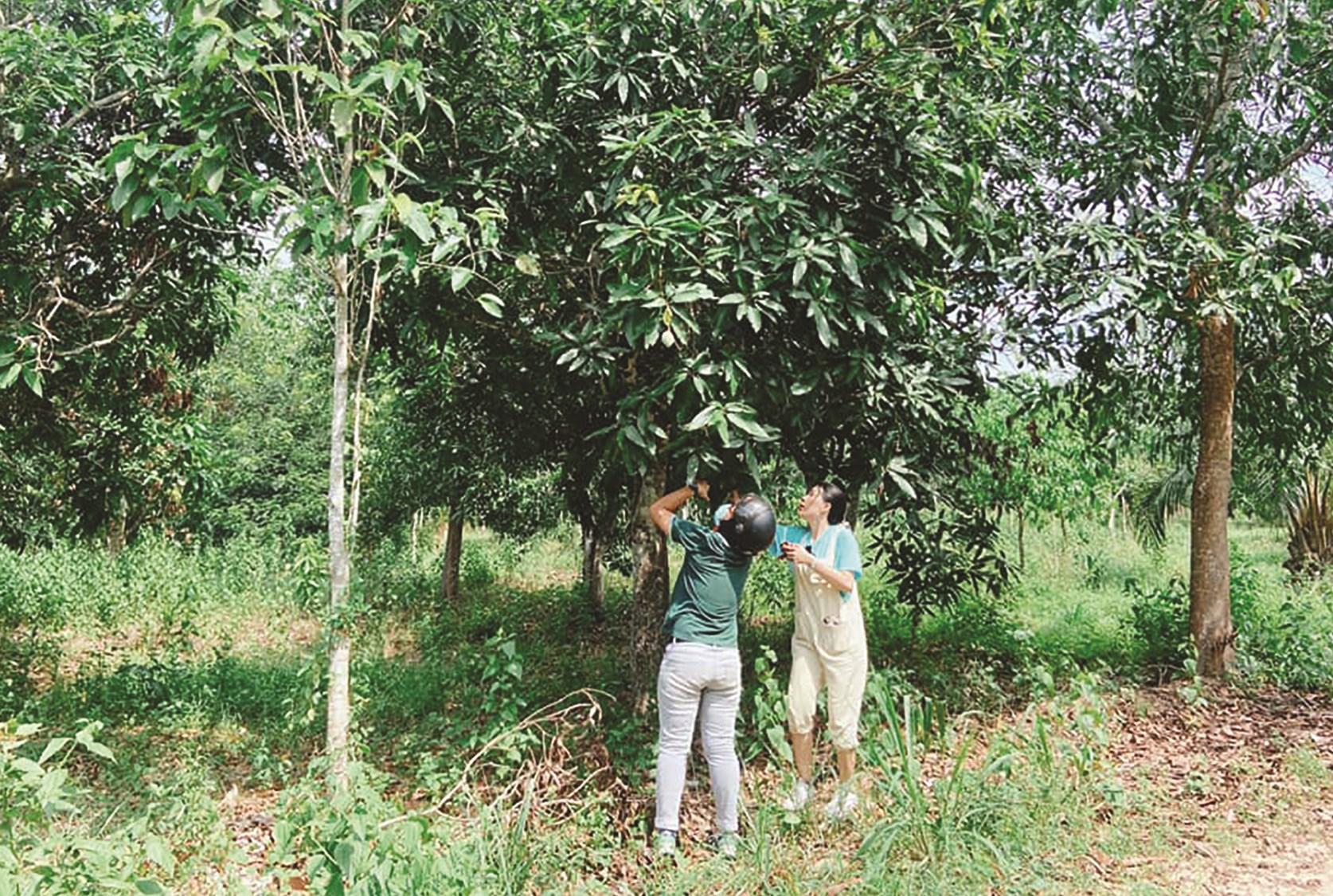Du khách được tự tay hái và sử dụng sản phẩm nông sản