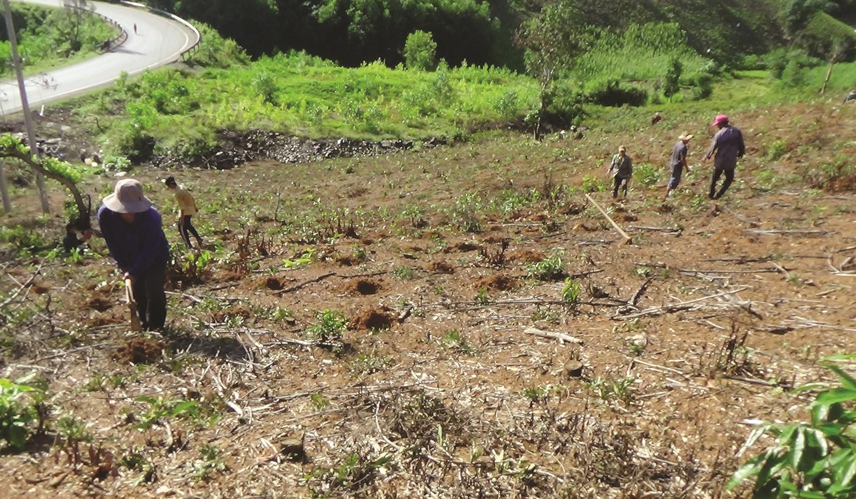 Khi những cơn mưa đầu mùa xuất hiện, người dân Khánh Vĩnh cũng bắt đầu trồng rừng.