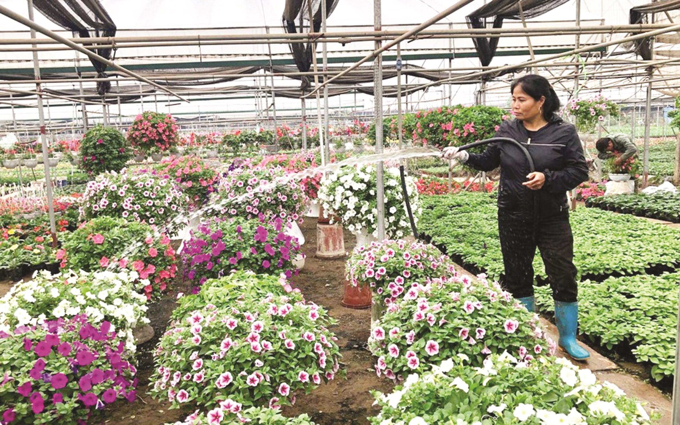Bảo đảm điện, nước giúp người dân Xuân Quan nâng cao thu nhập từ trồng hoa