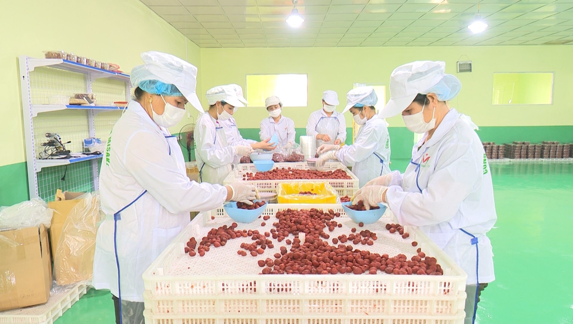 Công nhân Công ty MISAKI, KCN Thanh Bình, tỉnh Bắc Kạn đang chế biến quả mơ xuất khẩu sang Nhật Bản.