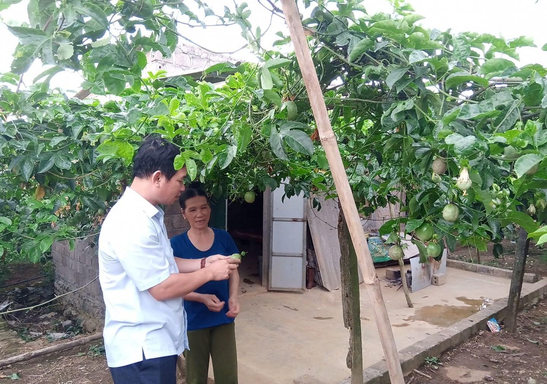 Người dân phát triển cây chanh leo mang lại giá trị kinh tế cao.