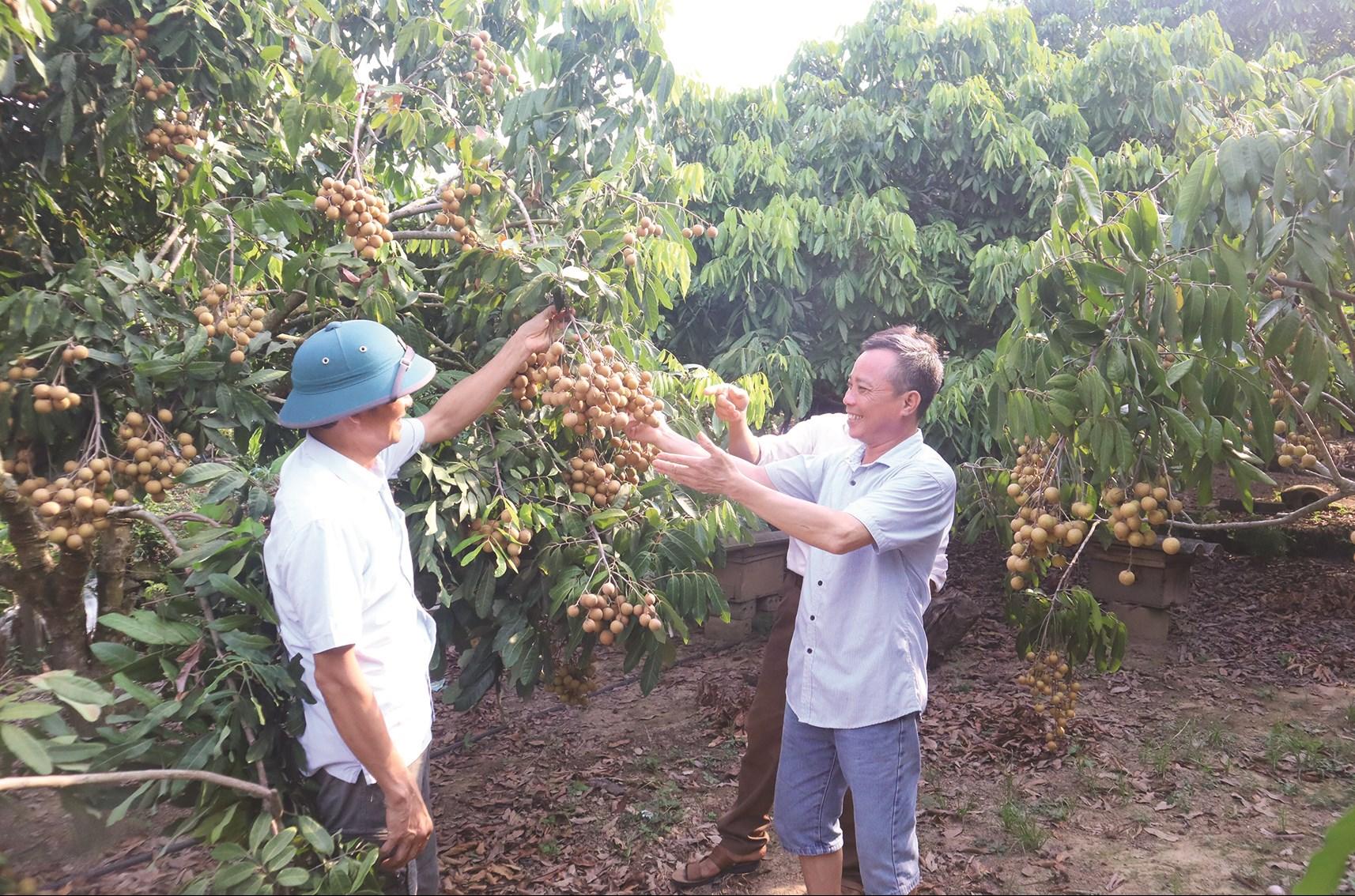 Đảng bộ huyện Lục Nam (Bắc Giang): Tạo đột phá trong phát triển vùng dân tộc thiểu số 1