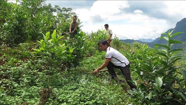 Người dân bản Sáng Tùng, xã Tả Ngảo yên tâm phát triển kinh tế ở vùng đất tái định cư mới. Ảnh: Việt Hoàng-TTXVN