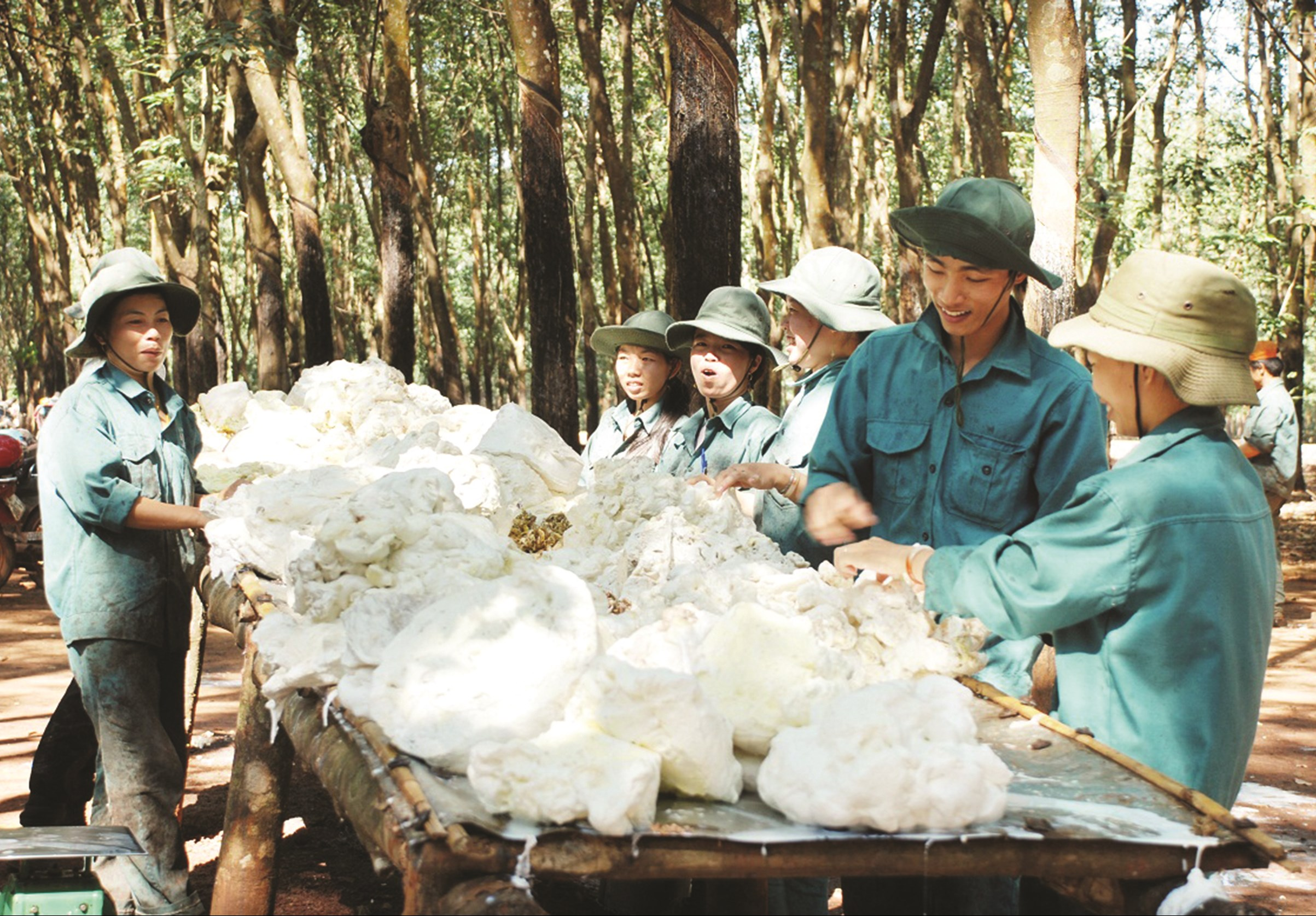 Sản phẩm cao su tỉnh Bình Phước chủ yếu mới dừng lại ở chế biến thô nên giá trị mang lại còn thấp