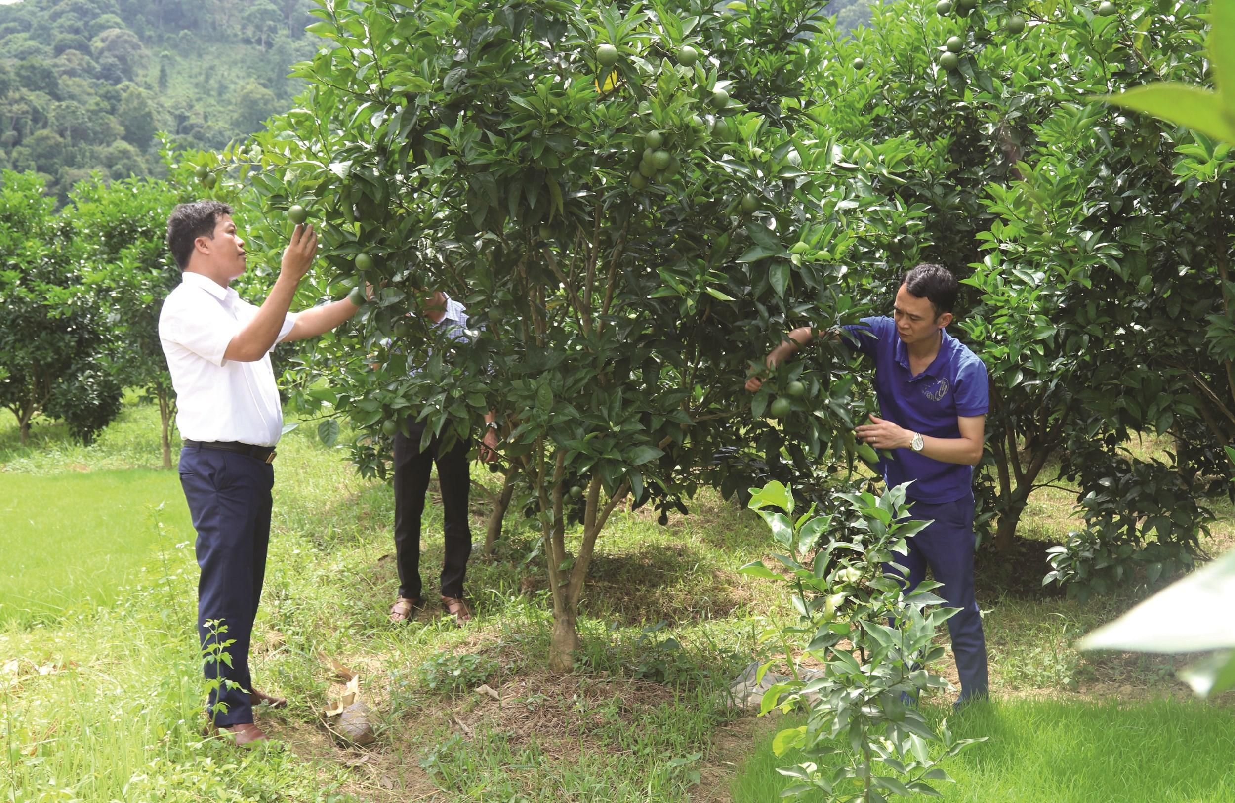 Người dân xã Đồng Giáp, huyện Văn Quan được tập huấn chuyển đổi phát triển cây ăn quả mang lại giá trị kinh tế cao.