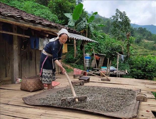Người dân Hoài Khao có cuộc sống gần gũi thiên nhiên và được thiên nhiên ban tặng nhiều món quà quý giá. Chè dây là một trong những món quà quý đó. Chè dây được hái từ rừng, phơi khô, pha nước uống rất có lợi cho sức khỏe, đặc biệt là những người bị bệnh dạ dày. Ảnh: Quốc Đạt - TTXVN