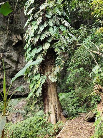 Với lối sống gần gũi thiên nhiên, bảo vệ môi trường, người dân xóm Hoài Khao vẫn giữ được những cây cổ thụ hàng trăm năm tuổi tỏa bóng mát lịm. Ảnh: Quốc Đạt - TTXVN