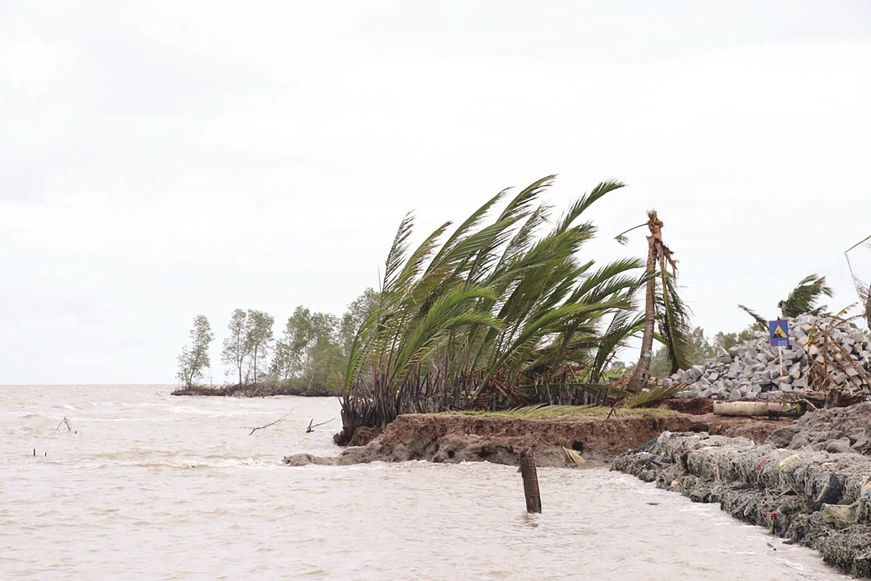 Nhiều điểm trên tuyến đê biển Tây không còn đai rừng phòng hộ