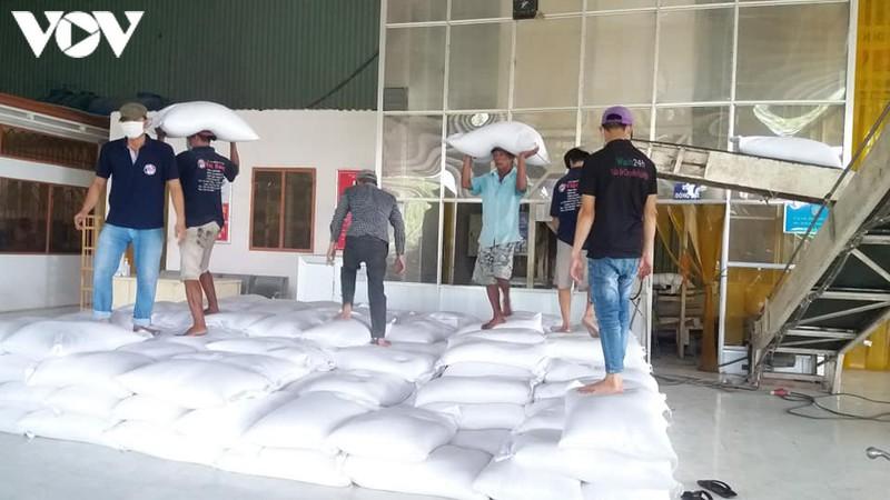 Giá lúa gạo tăng hoạt động kinh doanh mặt hàng này sôi nổi