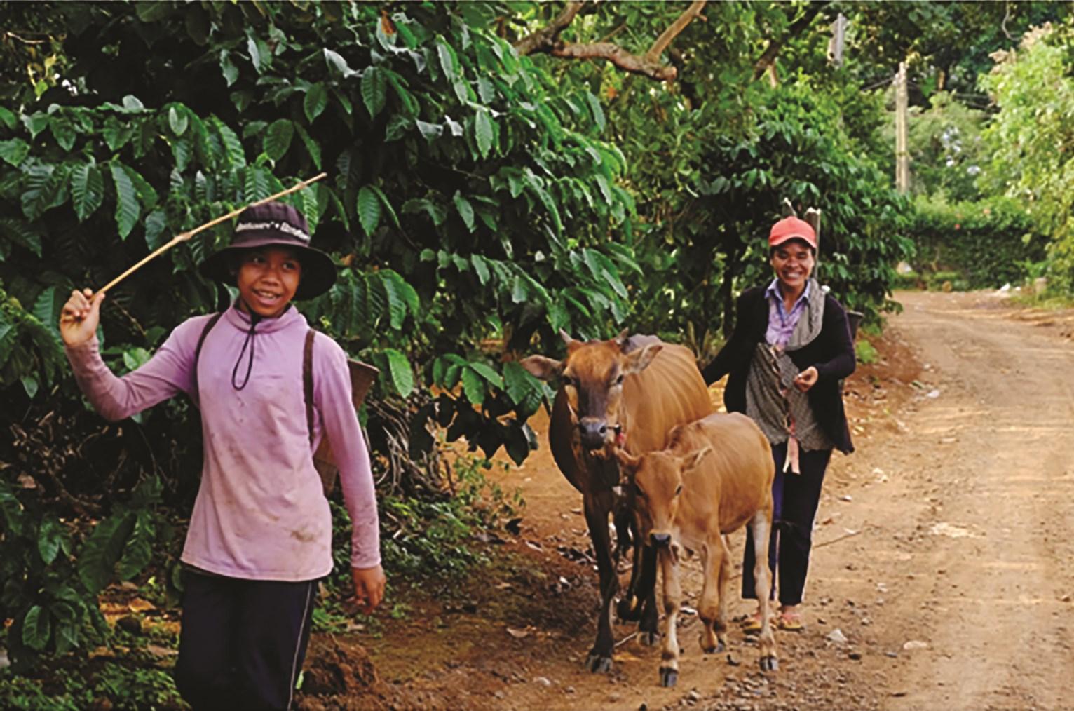 Nhờ tiếp cận nguồn vốn tín dụng của NHCSXH, đồng bào DTTS ở Gia Lai đã có điều kiện phát triển trồng trọt, chăn nuôi, đẩy lùi tín dụng đen