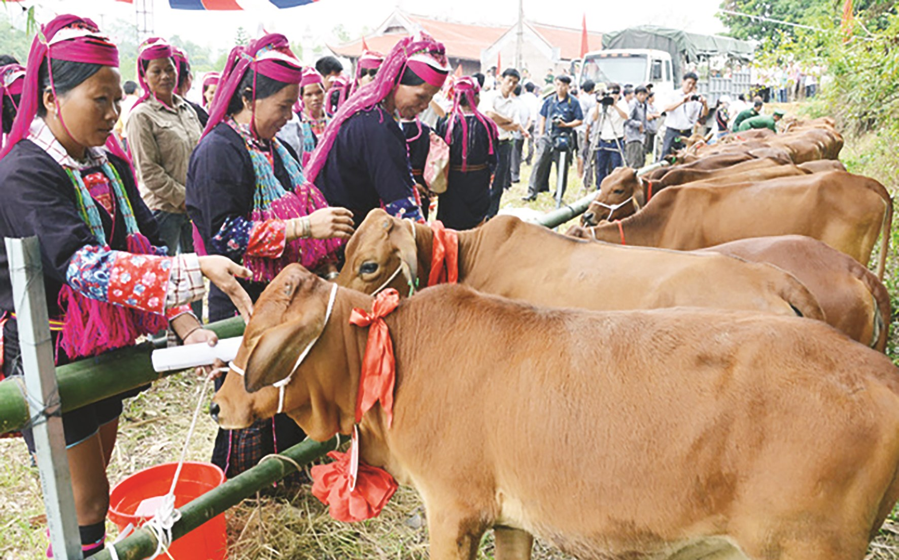 Chương trình tặng bò cho hộ DTTS nghèo ở huyện Hải Hà, Quảng Ninh.