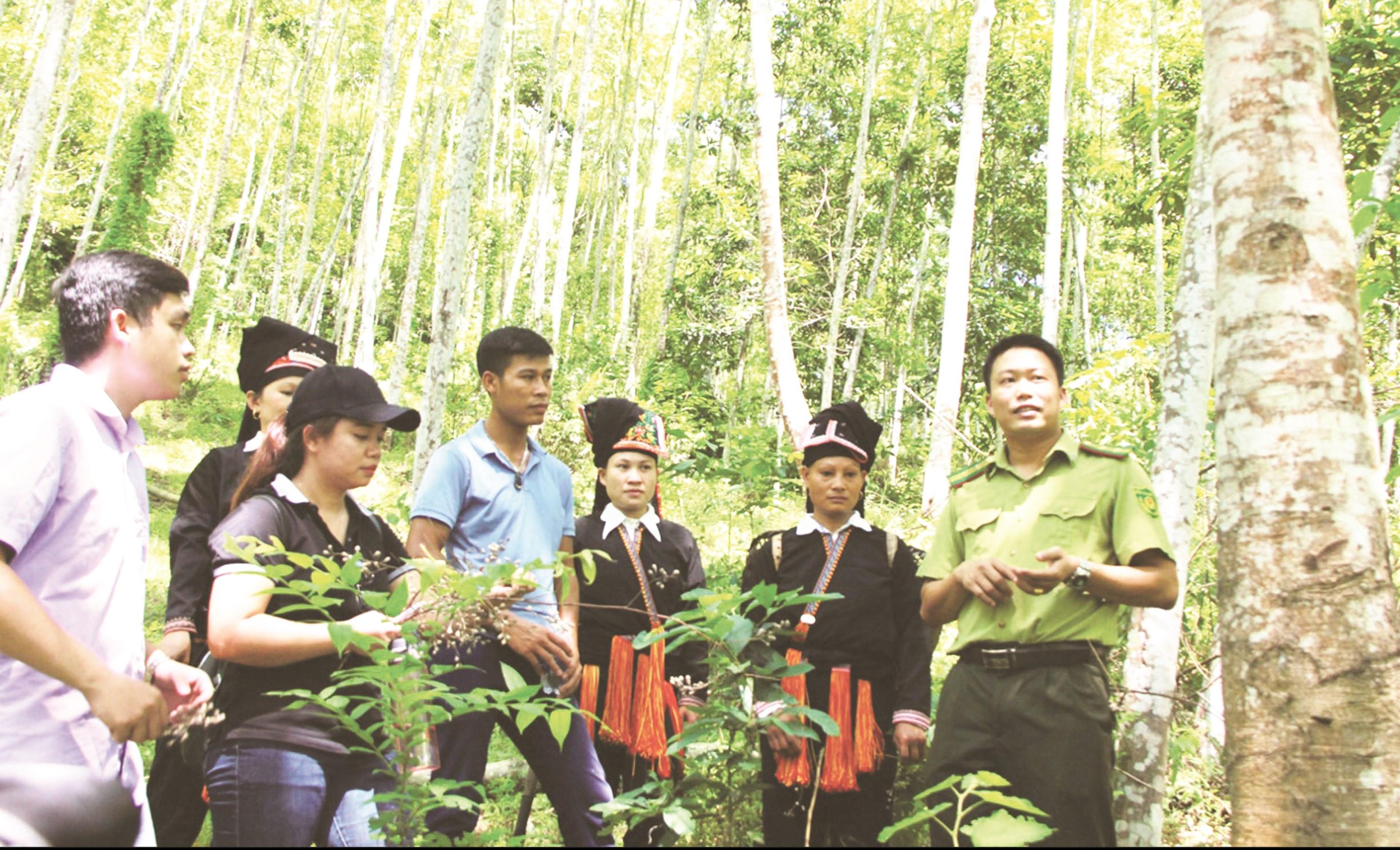 Cần có chính sách đầu tư về bảo vệ và phát triển rừng và lâm sản thương mại phù hợp, bảo đảm thu hút đầu tư phát triển rừng và thu nhập cho người dân trồng rừng. (Ảnh tư liệu)
