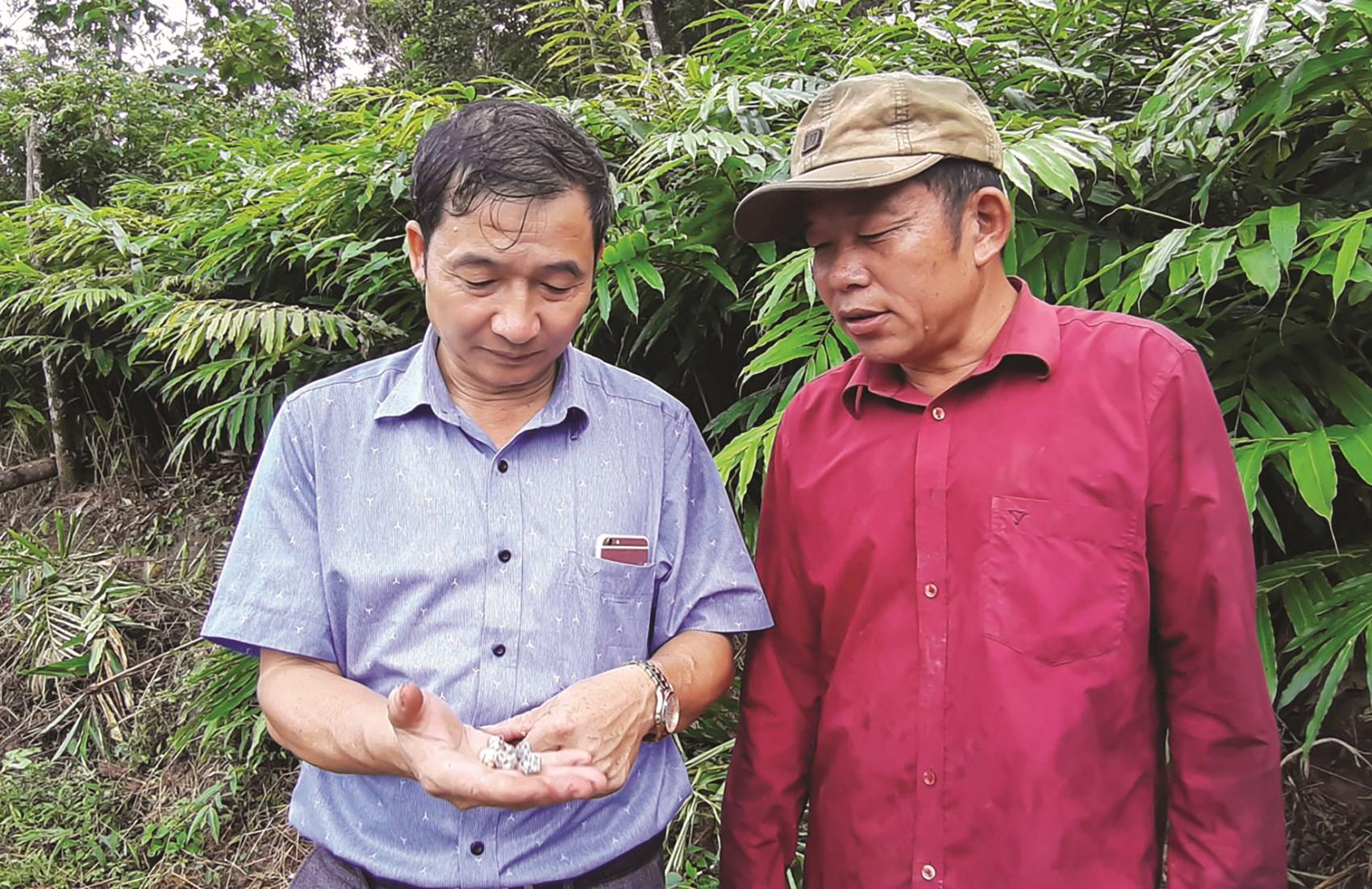 Bí thư Đảng ủy xã Chà Nưa Khoàng Văn Van (áo xanh) tiên phong làm kinh tế với mô hình trồng cây sa nhân đỏ được Nhân dân tin và làm theo.